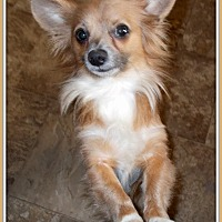 Adopt A Pet :: Trail - Girard, GA