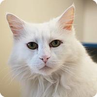 Adopt A Pet :: Blanche - Redwood City, CA