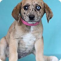 Adopt A Pet :: Natalie - Waldorf, MD