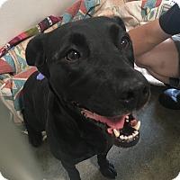 Adopt A Pet :: Kalypso - Visalia, CA