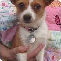 Adopt A Pet :: Juliet - Kingwood, TX