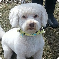 Adopt A Pet :: Pierre*ADOPTED!* - Chicago, IL