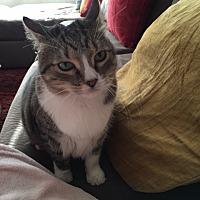 Adopt A Pet :: Olive - San Jose, CA