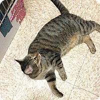 Adopt A Pet :: Claude-Adoption Pending! - Colmar, PA