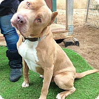 Adopt A Pet :: Handsome Prince William - Burbank, CA