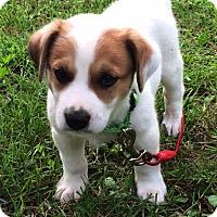 Adopt A Pet :: Frankie - Minneapolis, MN