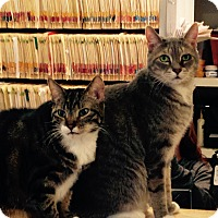 Adopt A Pet :: Tug and Rosemary - Morristown, NJ