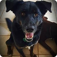 Adopt A Pet :: Chelsea - Alpharetta, GA