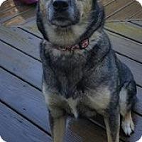 Husky/Shepherd (Unknown Type) Mix Dog for adoption in Glen Burnie, Maryland - Abby