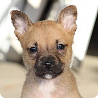 Adopt A Pet :: Killian - Millersville, MD