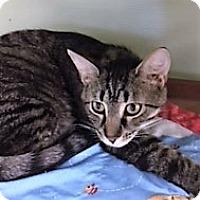 Adopt A Pet :: Gottfried - Medina, OH