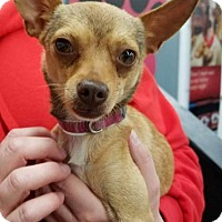 Adopt A Pet :: Ara - Plainfield, IL