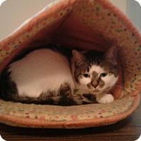 Adopt A Pet :: Skiddles - Warren, MI