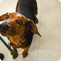 Adopt A Pet :: Fiji - Pittsburg, KS