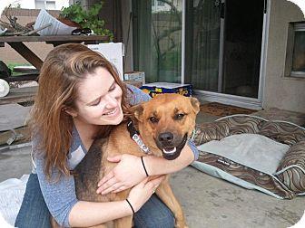 German Shepherd Dog Mix Dog for adoption in Santa Barbara, California - McKinnley