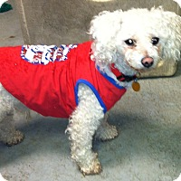 Adopt A Pet :: Spikey - Grafton, MA