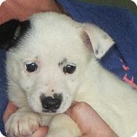 Adopt A Pet :: Ona - Salem, NH