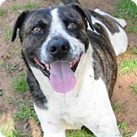 Adopt A Pet :: WILEY - Tallahassee, FL