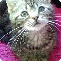 Adopt A Pet :: Arella - McDonough, GA