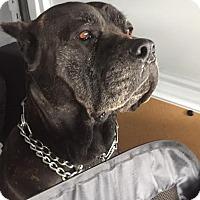 Adopt A Pet :: Mona - Los Angeles, CA