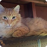 Adopt A Pet :: Markie - Manchester, CT