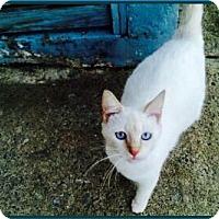 Adopt A Pet :: Jimena - Sanford, NC