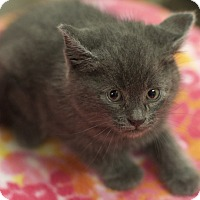 Adopt A Pet :: Babe - Great Falls, MT