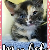 Adopt A Pet :: Misfit - Edwards AFB, CA