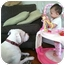 Photo 3 - American Bulldog/Pit Bull Terrier Mix Dog for adoption in Bellflower, California - Dozer