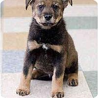 Adopt A Pet :: Jared - Portland, OR