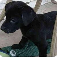 Adopt A Pet :: Macchiato - Phoenix, AZ