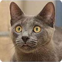 Adopt A Pet :: Zeke - Naples, FL
