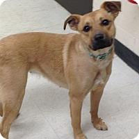Adopt A Pet :: Little One - Willington, CT