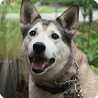 Adopt A Pet :: Ryder - Plano, TX