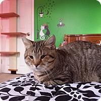 Adopt A Pet :: Ralphie - Fayette City, PA