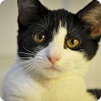Adopt A Pet :: Charleigh (1/2 PRICE ADOPTIONS - New Smyrna Beach, FL