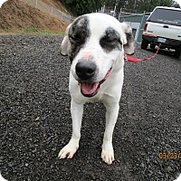 Adopt A Pet :: Henry - Tillamook, OR