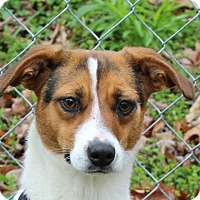 Adopt A Pet :: Chloe - Washington, DC