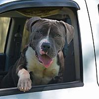 Adopt A Pet :: Toro - Covington, TN