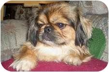 Pekingese Dog for adoption in Richmond, Virginia - Peaches