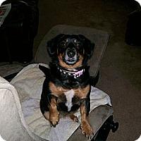 Adopt A Pet :: Baby  (Courtesy Posting) - Richmond, VA