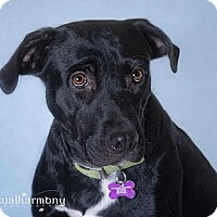 Adopt A Pet :: Nina - Phoenix, AZ