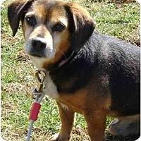 Adopt A Pet :: Jack - Honaker, VA