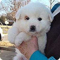 Adopt A Pet :: Hazel  *Adopted - Tulsa, OK