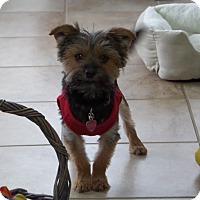 Adopt A Pet :: Teddy - Homewood, AL