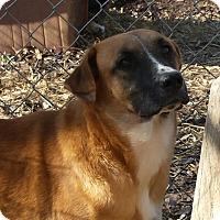 Adopt A Pet :: Marty- family dog - Gaffney, SC