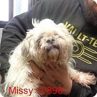 Adopt A Pet :: missey - baltimore, MD