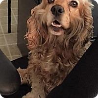 Adopt A Pet :: Kala - ADOPTION PENDING - Sacramento, CA