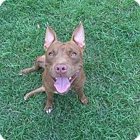 Adopt A Pet :: Rinnie - Lorida, FL