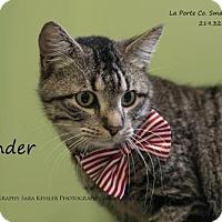 Adopt A Pet :: Thunder - La Porte, IN